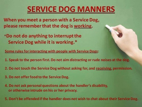 socialjusticemage:  [Service Dog Manners When you meet a person with a Service Dog, please remember that the dog is working. *Do not do anything to interrupt the Service Dog while it is working.* Some rules for interacting with people with service dogs: Speak to the person first. Do not aim distracting or rude noises at the dog. Do not touch the Service Dog without asking for, and receiving, permission. Do not offer food to the Service Dog. Do not ask personal questions about the handler's disability, or otherwise intrude on his or her privacy. Don't be offended if the handler does not wish to chat about their Service Dog.] sdsontherun:  For our followers without service dogs!