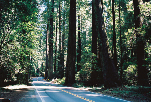 5-ghosts:   Hwy ? humboldt redwoods by JCGlass on Flickr.