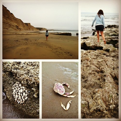 Laura the Explorer!! 🐚🌾🌊 #crabby #crabbypatty #rocks #clif #beachday #beach #explore #newsurroundings @calauraperez (at Point Reyes)