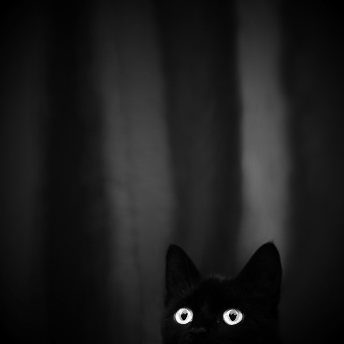 p-e-r-e-g-r-i-n-e:  Veronika Klimonova  Limbo cat :3 Sorry, not my usual kind of post.