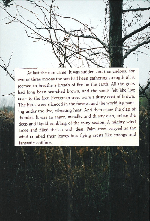 "slowdownscout:  ""Things Fall Apart"",Chinua Achebe (x)"