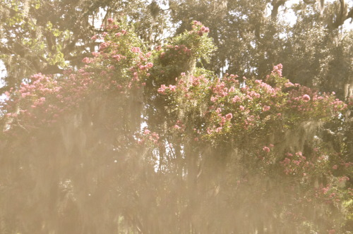 silentnostalgia:  a beautiful tree, photographed by me, with surrounding sunlight spilling about, blooming, breathing, simply being moments such as these awe me to an indescribable degree  (my main blog)