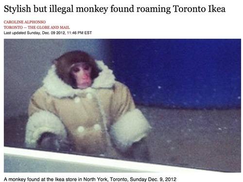 Mono estiloso pero ilegal encontrado vagando por el Ikea de Toronto. La noticiaha dado la vuelta al mundo, pero esta es la web con el mejor titular. Extra - Ecce homo meets Stylist Monkey: