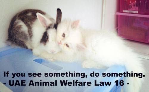 "Our photo for the, ""If you see something, do something. UAE Animal Welfare Law 16,"" campaign in honor of Roxy. RIP Roxy."
