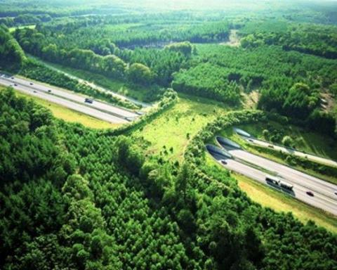 fackyeaharchitecture:  samli:  thestage1408:  This is a wildlife bridge in the Netherlands. Wildlife bridges are designed to help animals cross busy highways in safety. They don't just protect wildlife from being hit by cars - they also connect fragmented habitats and help populations intermingle and breed.  The Netherlands is leading the way in designing these bridges. The country is home to more than 600 similar crossings.  talán a mieink nem ilyen menők, de az M7-es újabb szakaszán pár kilométerenként van ilyen  TumbleOn)