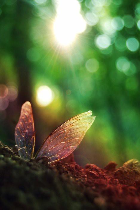 sky trees sun nature Wings Spiritual