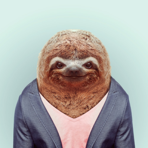zooportraits:  SLOTH by Yago Partal for ZOO PORTRAITS  I always love animals wearing suits…