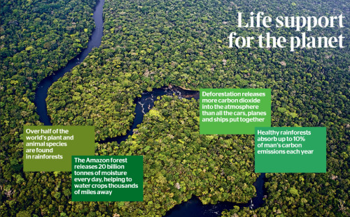 The rainforests are a complex environment essential to the stability of our planets climate and its ability to support life in its current form. But they are being lost at an alarming rate. Take action today as we celebrate International Day of Forests! http://www.greenpeace.org/seasia