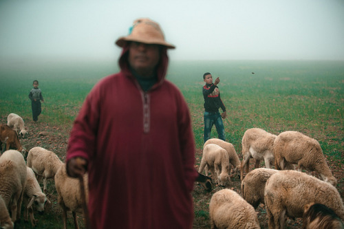 Shepherds by TGKW on Flickr.