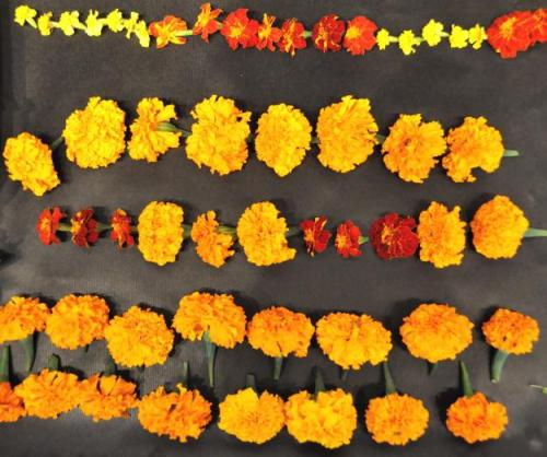 DIY Marigold Garlands, by flower farmer Katherine Anderson.