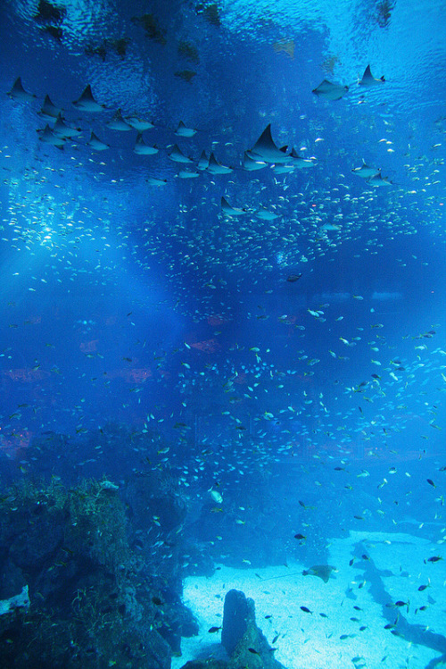 tinkle-bells-hell:  i feel like going to the aquarium now
