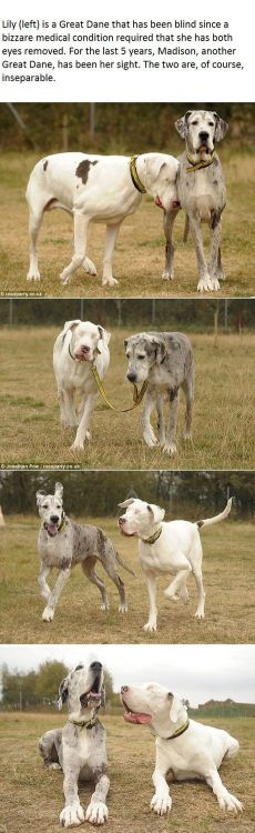 A dog's seeing eye dog