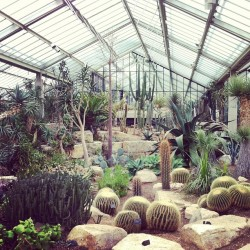 amyrhodes:  Heaven #cacti #greenhouse #kew #london (at Royal Botanic Gardens)