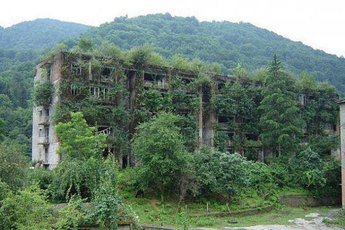 earth-phenomenon:  Forest in Abkhazia takes over abandoned apartment building.