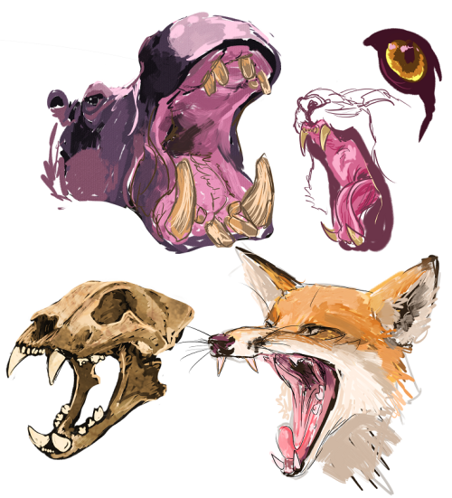 warm up: animals with mouth openhippo, tiger, tiger skull, fox yawning.from referenceI always forget how wide most animals can open their mouth…