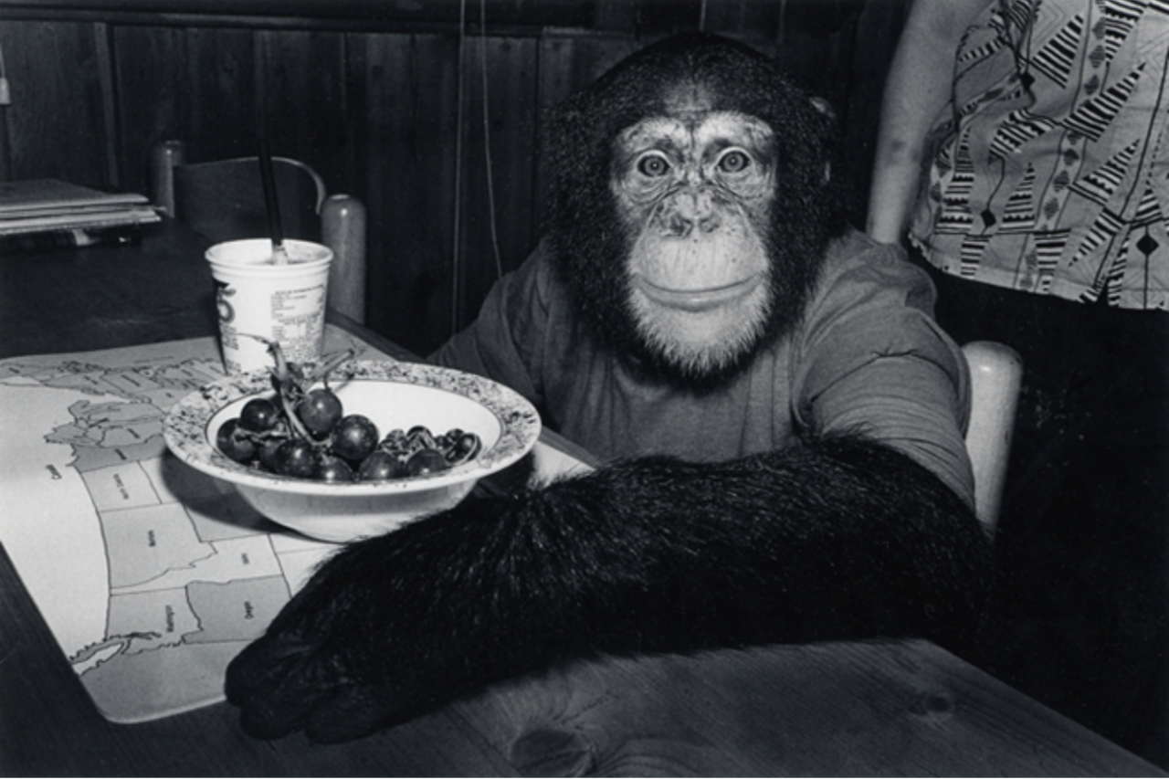 fantastic monkey photo I probably posted before by robin schwartz