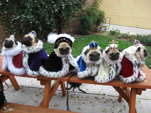 pugsession:  Enchanted Pugs Royal Court