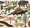 Katie scott evolution book story of life @lufthund