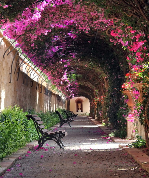 visitheworld:  Passage at Jardín de Monforte in Valencia, Spain (by Victor_Ferrand).