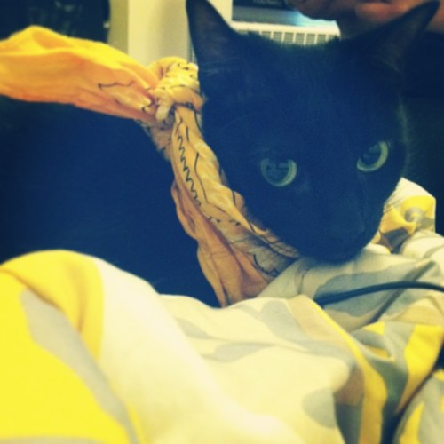 Cat in a bandana pt. 1 #saul @alexzandrawithaz @caressachu @pacificinterstatement  (at The TARDIS)