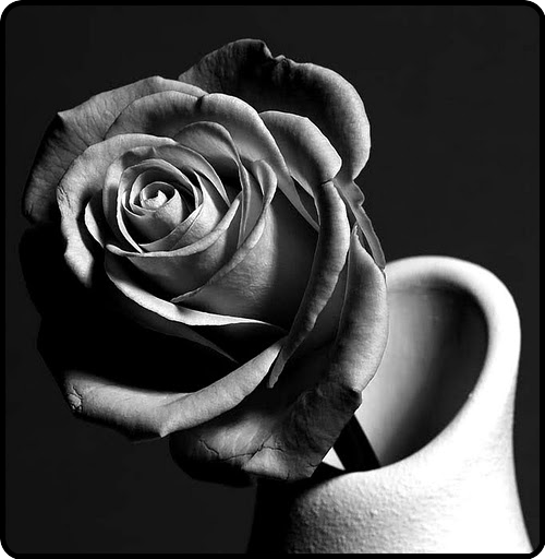 a single rose means i love you…