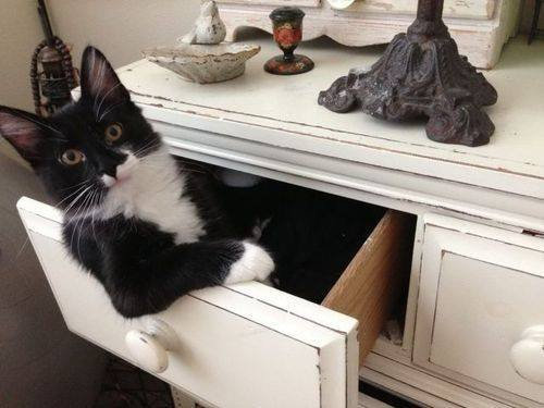 "cindyburkeoriginals:  ""I don't always hang out in drawers but when I do, it's your underwear drawer."""