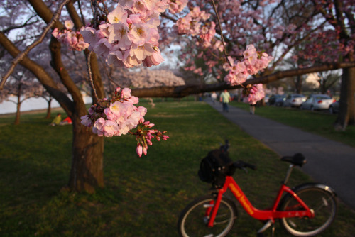 jacquesofalltrades:  One of my photos used in a DCist piece on Capital Bikeshare… it's a confluence of some of my favorite things! (via Capital Bikeshare Had Its Biggest Day Ever Yesterday: DCist)