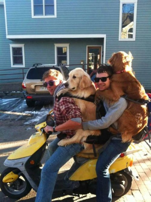 silhouetiquette:  collegehumor:  Two Men and Their Dogs and a Motorcycle A man, that man's best friend, and his best friend, and his best friend's best friend. I swear, officer.  Allison Bianchi's Future Husbands.  I like it. I'd put a ring on it.