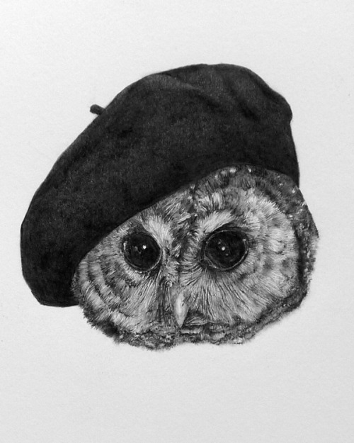 just-art:  Strix occidentalis caurina Pencil drawing by Susan Rotondo