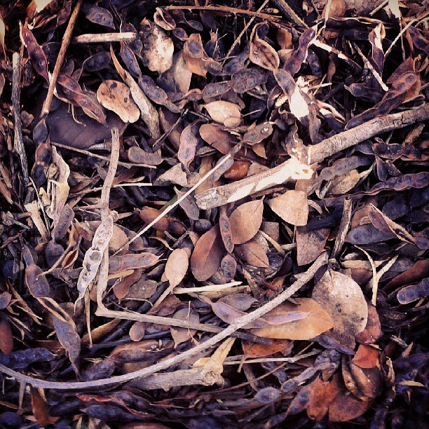 #leaves #wood #nature #chile