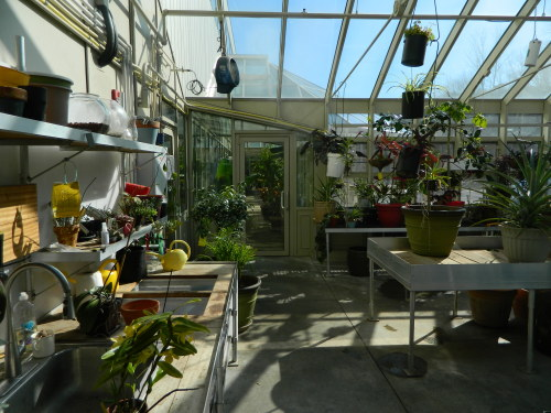 It is cold outside, but inside the greenhouse it is nice and warm. With a Solar Innovations, inc. greenhouse you can grow plants year round.  Even with snow outside, we're able to grow plants at our Pennsylvania facility. The addition of heaters does the trick and provides the plants with a comfortable environment. Potting benches also create great places to water plants, store materials, and re-pot root-bound flowers.