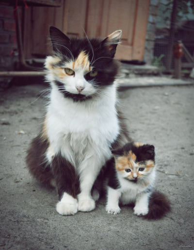 alijayy:  mom looks pissed