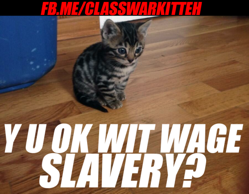 Kitteh iz confused y u ok wit wage slavery?