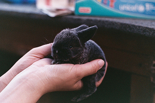 wildstag:  Bunny 2 by Simon_J_C, on Flickr.