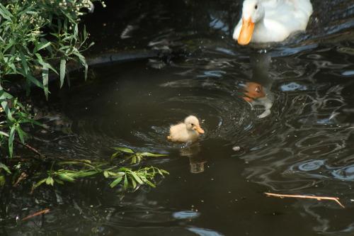 venus-garden:  little baby #awww#cute