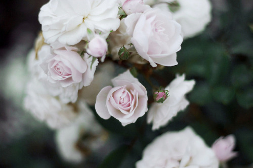inscendo:  untitled by petals of paula on Flickr.