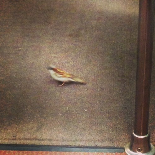 There's a very confused bird on my morning commute. #WMATA
