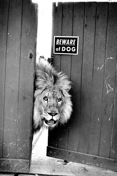"nonconcept:  ""Beware of the dog"" by John Malmin."