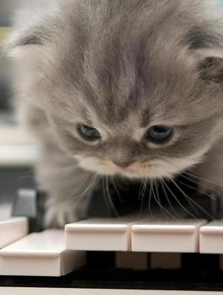 catsbeaversandducks:  Little Mozart, the early years.