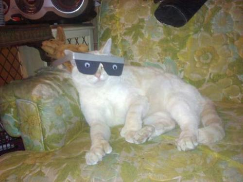 "thefluffingtonpost:  Cat Uses Fake Glasses to Snooze In Class To say that Alaska, a cat from Worcester, MA, is bored in his Intro to Psych class is an understatement. ""He can barely stay awake,"" says fellow classmate Chip Dixon. ""He's nodded off a few times and the professor gets mad."" Fortunately, Alaska's found an elegant solution. ""He glued two googly eyes to a pair of cardboard glasses,"" says Dixon. ""He can take as many cat naps as he likes, and no one will be the wiser."" Submitted by Eric Baldelli.  yeeeeaaaaah! That's my boy!!!"
