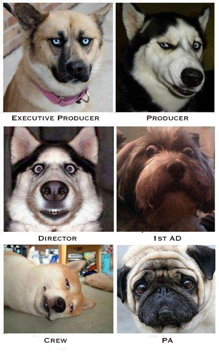 Film Production, boiled down to dogs.
