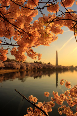sonistuff:  DC during spring <3