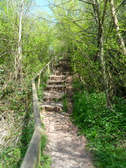 vwcampervan-aldridge: Steps in the woods, Hartshill Country park, Nuneaton, Leicestershire, England [All Original Photography by http://vwcampervan-aldridge.tumblr.com]