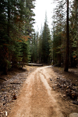 euphoricspirit:  road to nowhere, yosemite, california