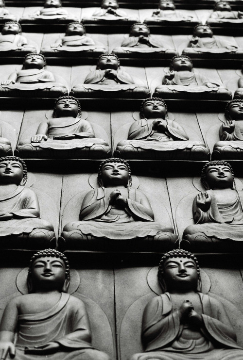 italdred:  Buddha Wall 2 (by Colin Roohan)