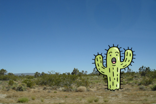 Nevada is home to the Surprised Cacti family, which, despite living on the roadside, are constantly surprised at cars.