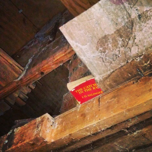 Peeking out of the rafters. #thecatcherintherye #jdsalinger #salinger #novel #attic #abandoned