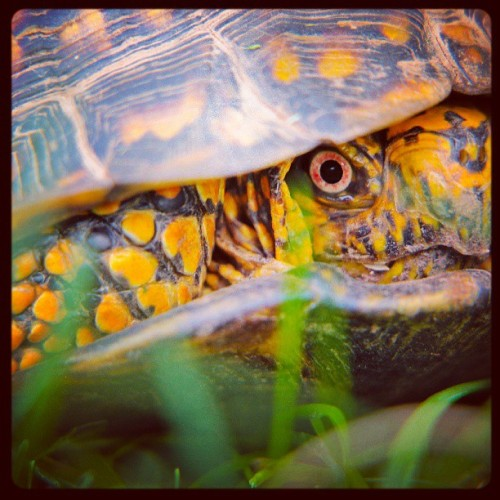 Another of my turtle shots from last week http://bit.ly/10hJ6ug