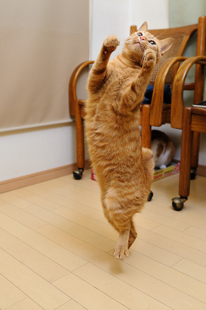 89cats:  happy step by rampx on Flickr.  ちょいな ちょいな