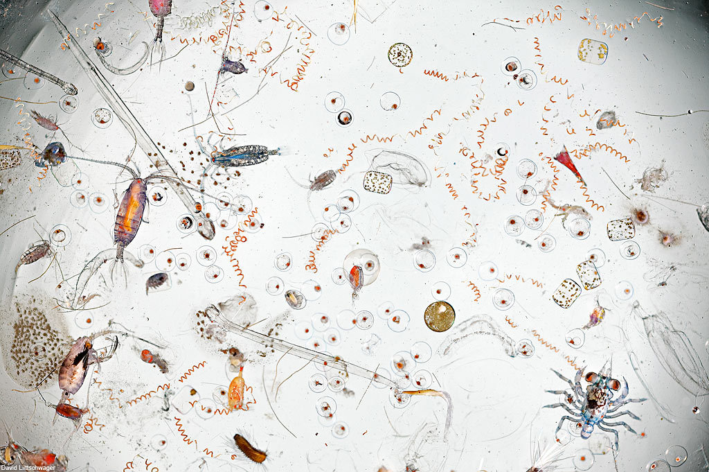 freshphotons:  A drop of seawater under a microscope, Via.